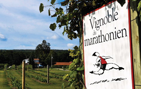 Vignoble du Marathonien